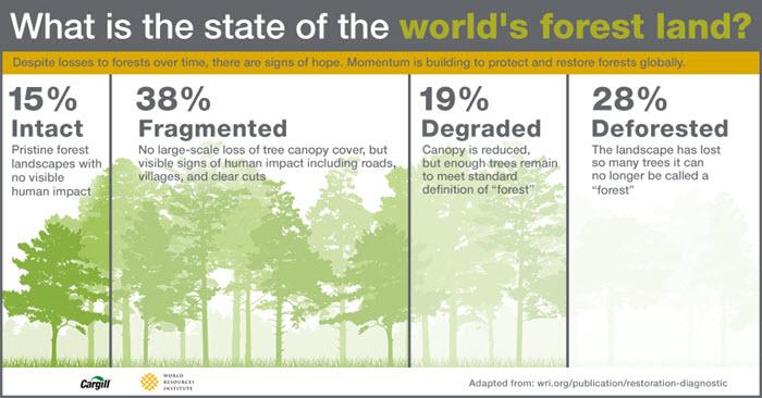 Grafico rappresentante lo stato delle foreste mondiali.